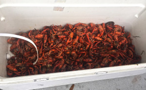 And of course crawfish. Deeper down, dirtier and delicious!