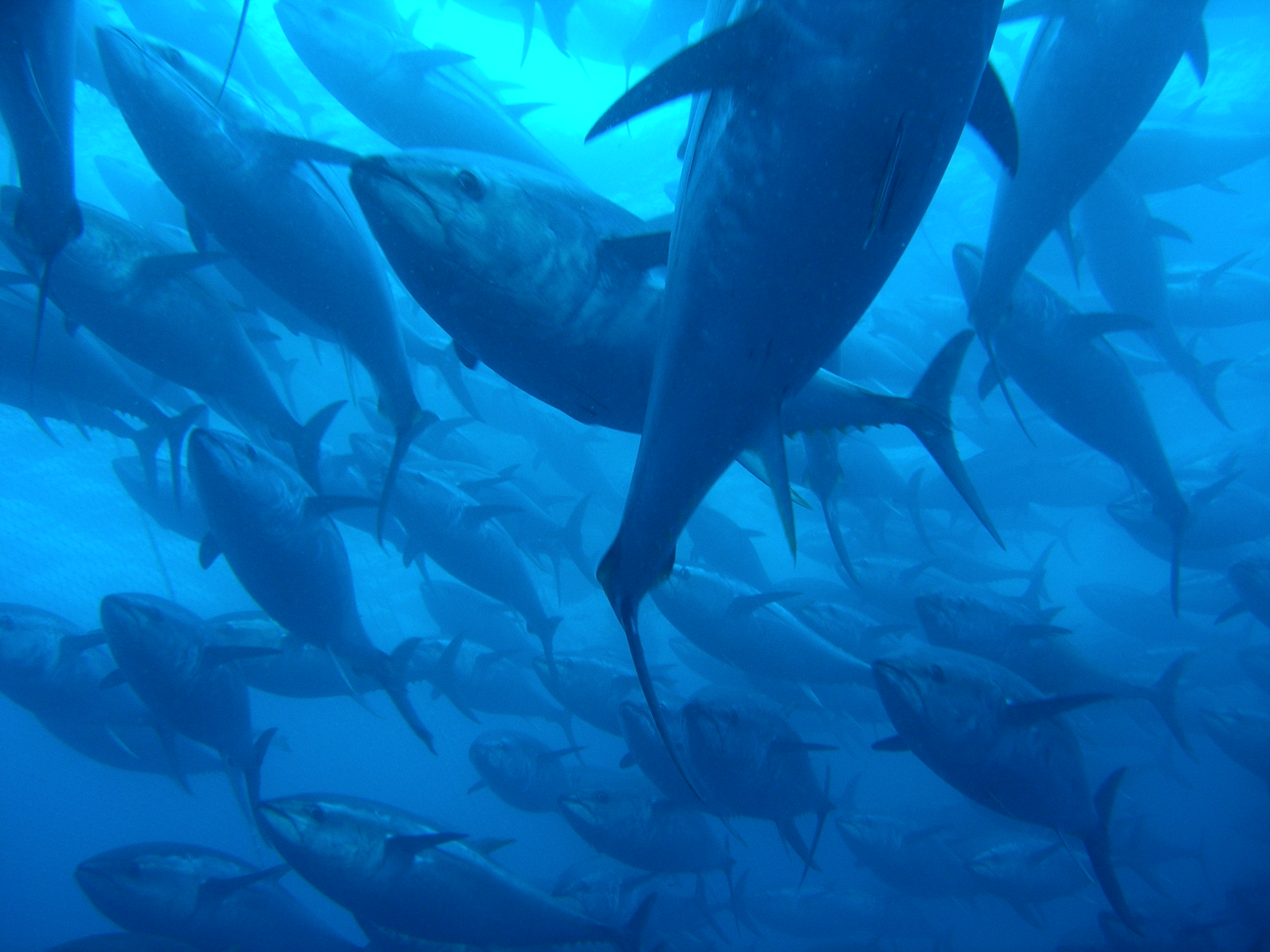 Fisheries Policy A Mixed Bag