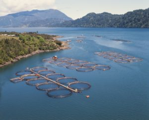chile-salmon-farm